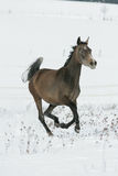 Beautiful arabian horse running in winter Stock Photos