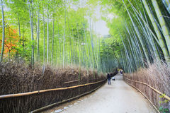 Beautiful Arashiyama Bamboo forest in Kyoto, Japan. The beautiful Arashiyama Bamboo forest in Kyoto, Japan Royalty Free Stock Photo