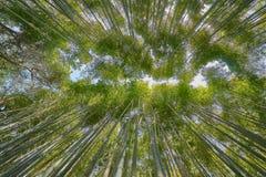 Beautiful Arashiyama Bamboo Groove. In Kyoto, Japan Stock Images