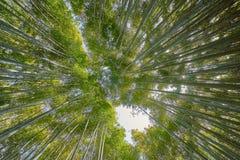 Beautiful Arashiyama Bamboo Groove. In Kyoto, Japan Stock Image