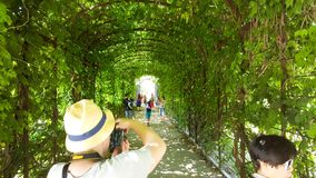 A beautiful arc of vegetation in Schönbrunn castle gardens in Vienna with people. In summer Stock Photography