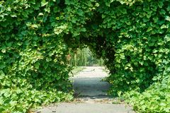 Beautiful arch with ivy. In the passage of the arch we see a staircase, branches of weeping willow and flowers stock photography