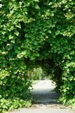 Beautiful arch with ivy. In the passage of the arch we see a staircase, branches of weeping willow and flowers stock photo