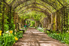 A beautiful arch of plants in Moscow Stock Images