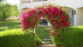 Beautiful arch of red flowers on a background of the house stock video footage