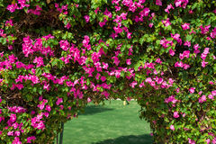 Beautiful arch of red flowers on the hotel Stock Photo