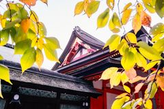 Beautiful architectural details of Yasaka Shrine Honden with colorful autumn leaves. Yasaka Shrine Honden beautiful architecture with colorful autumn leaves in stock photography