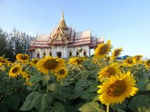 Beautiful architecture of Buddhist temple in flower field Stock Images