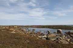 Beautiful arctic landscape in summer colours with blue skies and soft clouds. Arviat, Nunavut Canada royalty free stock image