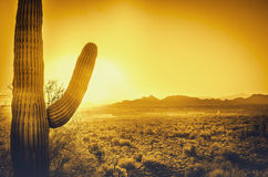 Beautiful Arizona Desert Sunset Stock Images