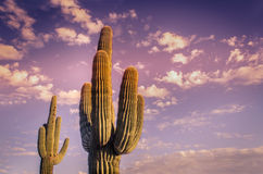 Beautiful Arizona desert sunset Stock Image