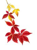 Beautiful arrangement of autumn leaves Stock Photography