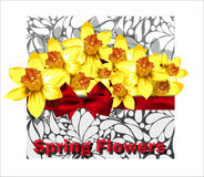 Beautiful arrangement of daffodils in the envelope Stock Photography