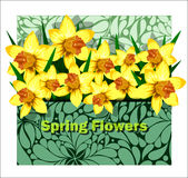 Beautiful arrangement of daffodils in an envelope Royalty Free Stock Photos
