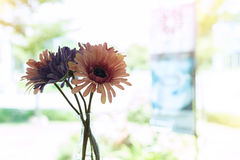 Beautiful artificial flower in small glass vase Royalty Free Stock Photo