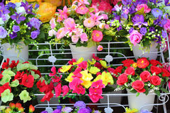 Beautiful of artificial flowers on the shelves. Stock Photo