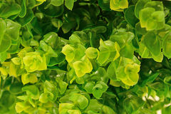 Beautiful artificial green leave as background texture Stock Photos