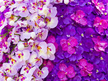 Beautiful artificial magenta orchid Royalty Free Stock Photo