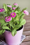 Beautiful artificial pink flowers in pink pot Royalty Free Stock Images
