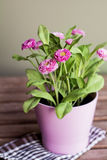 Beautiful artificial pink flowers in pink pot Royalty Free Stock Photo