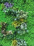 Beautiful artificial plant wall background Royalty Free Stock Image