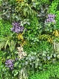 Beautiful artificial plant wall background Royalty Free Stock Photos
