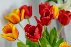 Beautiful Artificial Red Tulip flower stock photo