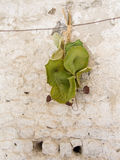 Beautiful artistic green leaves hanging. Royalty Free Stock Images