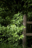 Beautiful artistic sunlit wooden fence post in lush English coun Stock Photography