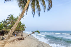 Beautiful as paradise beach. Beautiful, paradise beach with palm trees, West Africa Stock Photo