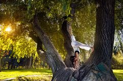 Yoga on the tree Stock Image