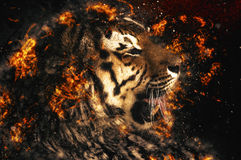 Beautiful Asian tiger. Fire illustration Royalty Free Stock Image