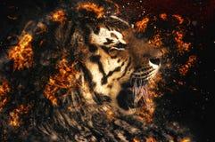 Beautiful Asian tiger Royalty Free Stock Image
