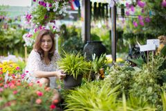 Asian woman select and buy flower. Beautiful Asian woman selecting flower in floral shop, lifestyle of modern housewife royalty free stock photography