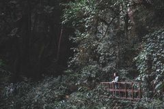 A beautiful Asian woman tourist trekking in tropical forest Stock Photos