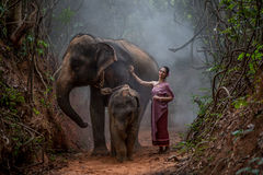 Beautiful Asian Woman wears thai dress with her elephant, elepha Royalty Free Stock Images
