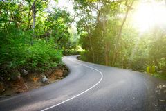 Beautiful asphalt road in palm jungle. stock photo