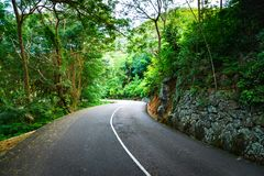 Beautiful asphalt road in palm jungle. royalty free stock photo