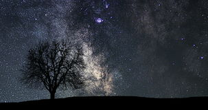 Beautiful astronomy time lapse. Milky Way Time lapse. Lonely tree