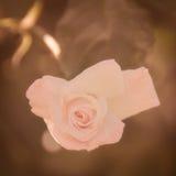 Beautiful Asymmetry. A beautiful, warm, asymmetrical rose Stock Photos