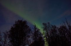 Beautiful aurora borealis dancing over tree tops. In autumn Royalty Free Stock Photography