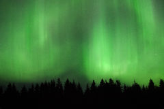 Beautiful Aurora borealis in Estonia Stock Images