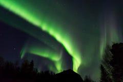 Beautiful aurora borealis over the tree tops Royalty Free Stock Photo