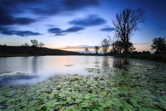 Lily pond at twilight Royalty Free Stock Photography
