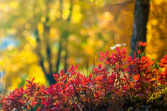Beautiful authumn nature background Stock Photo
