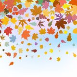 Beautiful autum leaves against sky. EPS 8 Royalty Free Stock Photography