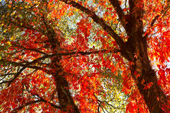 Beautiful autumn. Alley at the autumn park in day time Royalty Free Stock Photography