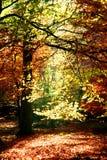 Beautiful autumn Stock Photos