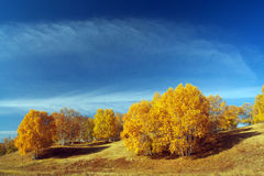 Beautiful autumn. The color is beautiful in autumn royalty free stock photos