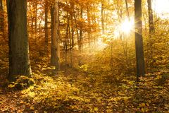 Beautiful Autumn Royalty Free Stock Photos